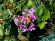 Violette Filli
