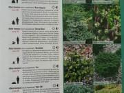 Каталог растений.