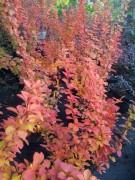 Осенью больше оранжевого