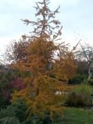 Осенняя окраска.
